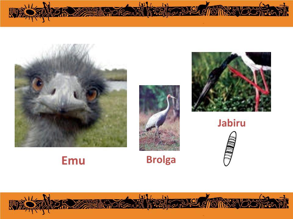 Jabiru Emu Brolga