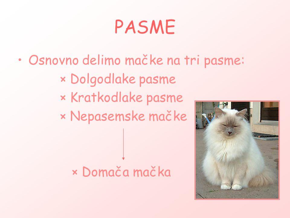 PASME Osnovno delimo mačke na tri pasme: × Dolgodlake pasme