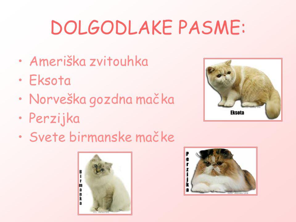 DOLGODLAKE PASME: Ameriška zvitouhka Eksota Norveška gozdna mačka