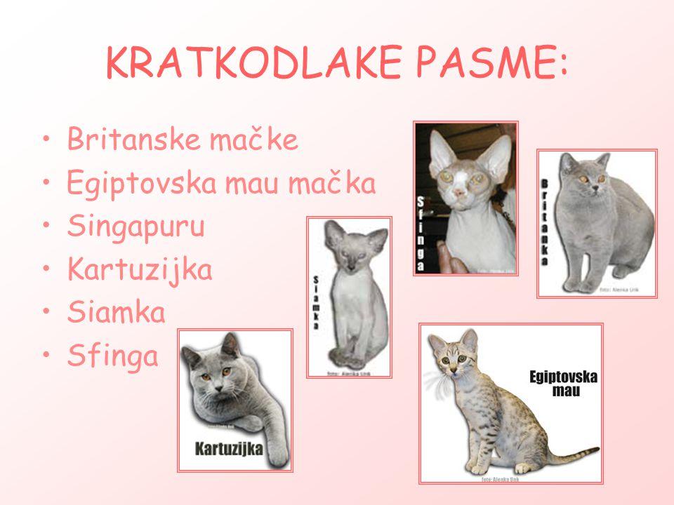 KRATKODLAKE PASME: Britanske mačke Egiptovska mau mačka Singapuru