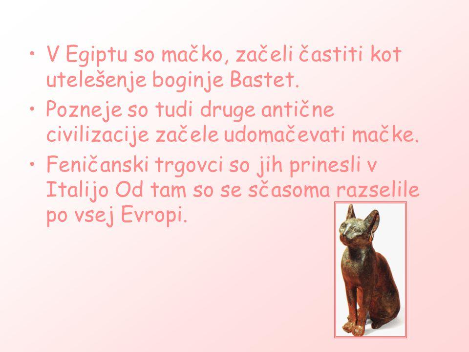 V Egiptu so mačko, začeli častiti kot utelešenje boginje Bastet.