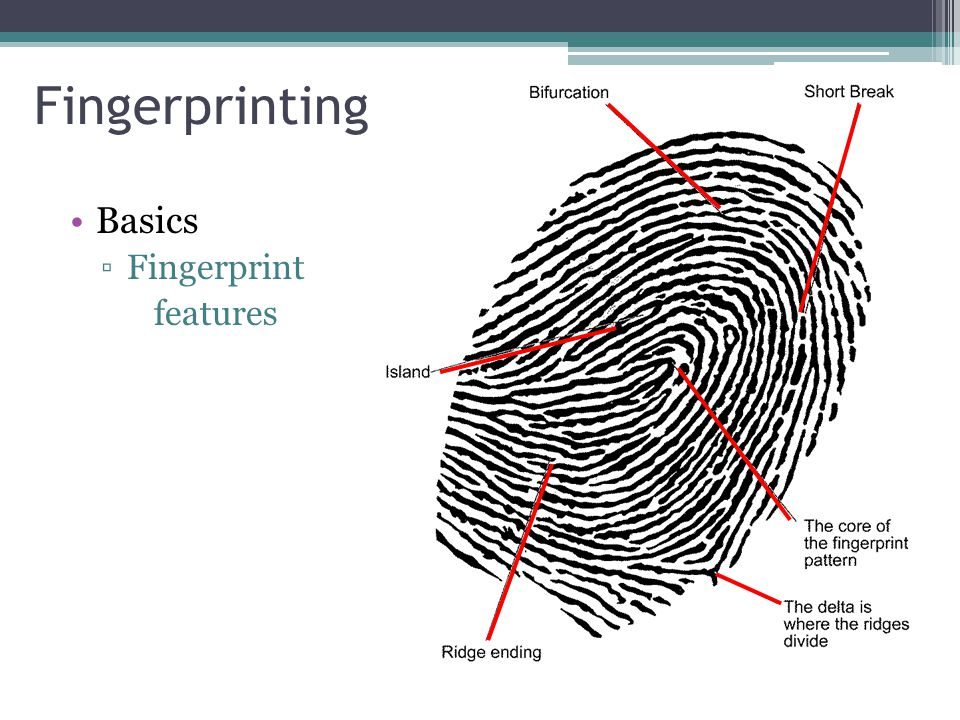 Fingerprinting Basics Fingerprint features
