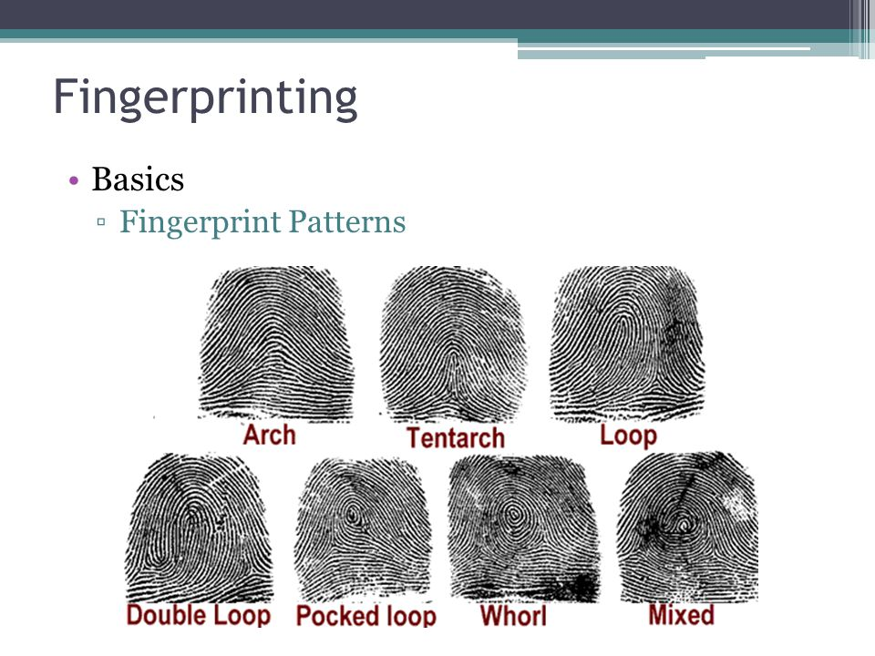 Fingerprinting Basics Fingerprint Patterns