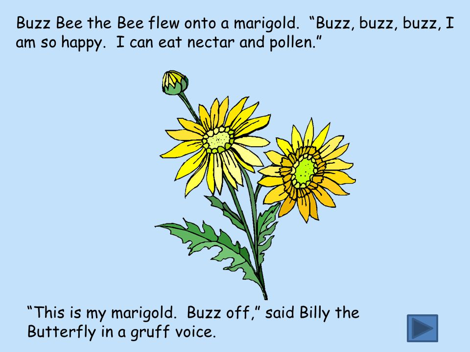 Buzz Bee the Bee flew onto a marigold. Buzz, buzz, buzz, I am so happy. I can eat nectar and pollen.
