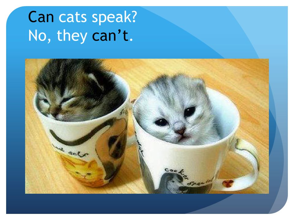 Can cats speak No, they can't.