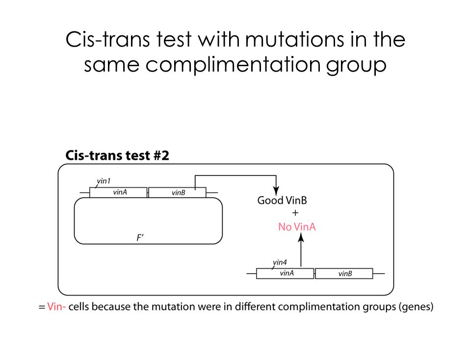 Cis-trans test with mutations in the same complimentation group