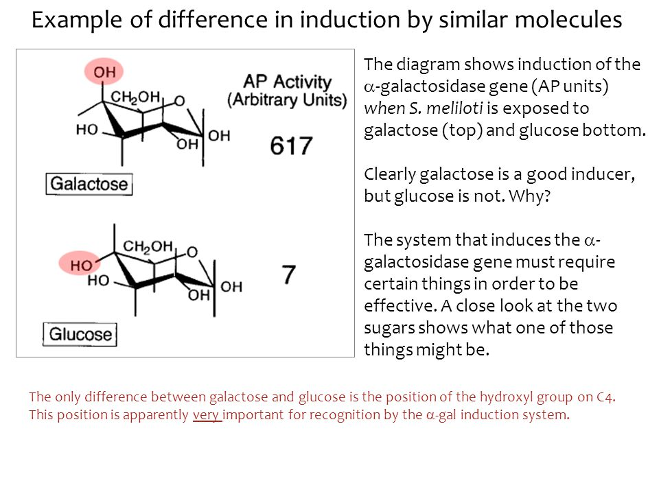 Example of difference in induction by similar molecules