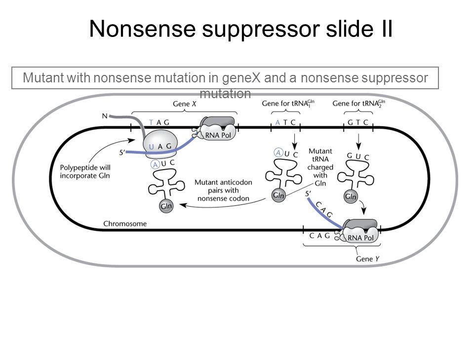 Nonsense suppressor slide II