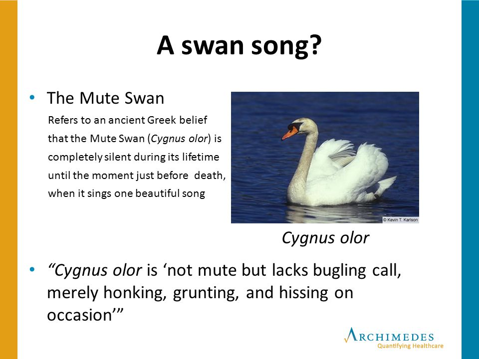 A swan song The Mute Swan