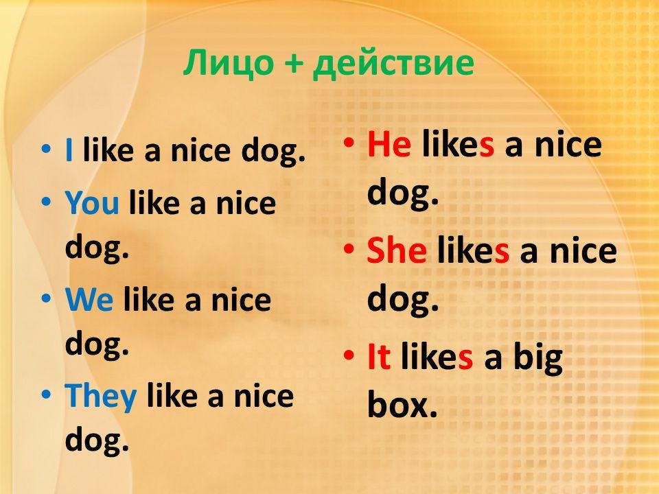 Лицо + действие He likes a nice dog. She likes a nice dog.