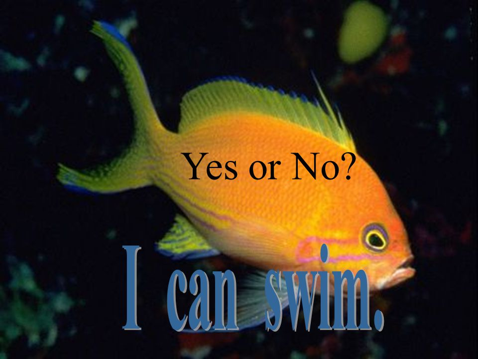 Yes or No I can swim.