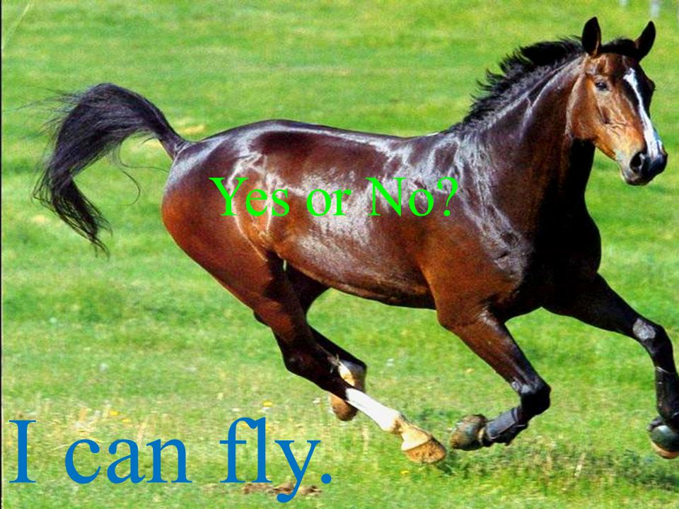 Yes or No I can fly.