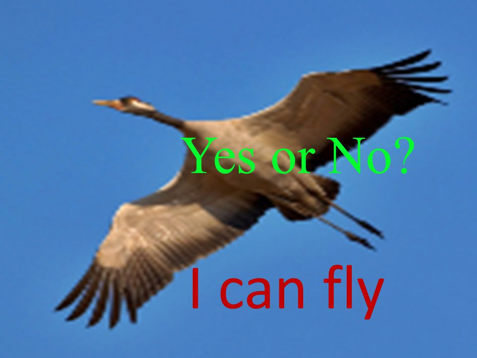 Yes or No I can fly