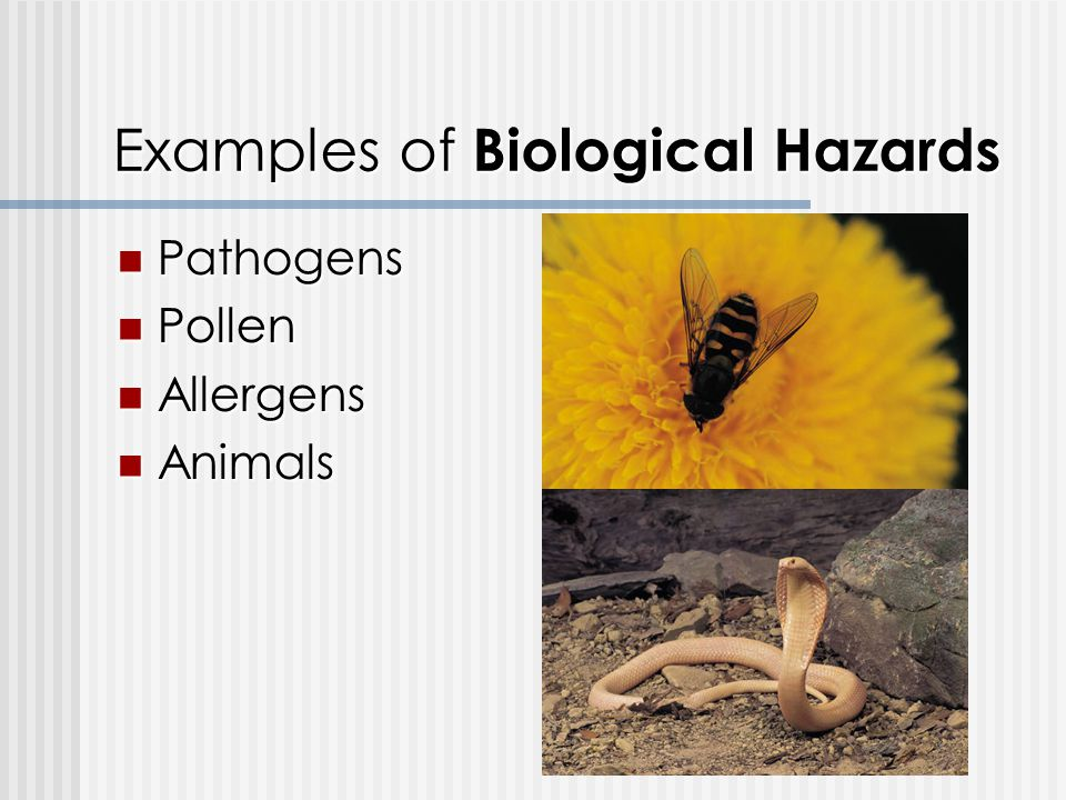 Examples of Biological Hazards