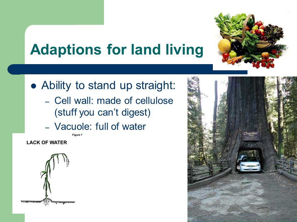 Adaptions for land living