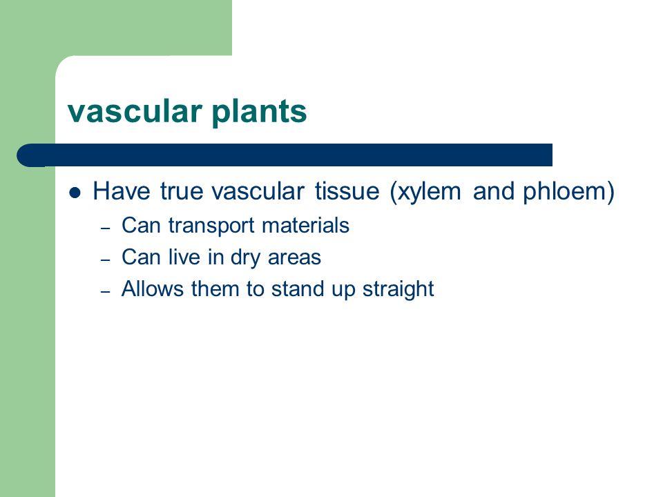 vascular plants Have true vascular tissue (xylem and phloem)