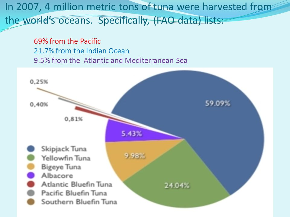 In 2007, 4 million metric tons of tuna were harvested from the world's oceans.