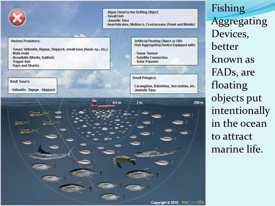 Fishing Aggregating Devices, better known as FADs, are floating objects put intentionally in the ocean to attract marine life.