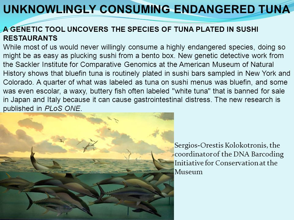 UNKNOWLINGLY CONSUMING ENDANGERED TUNA A GENETIC TOOL UNCOVERS THE SPECIES OF TUNA PLATED IN SUSHI RESTAURANTS