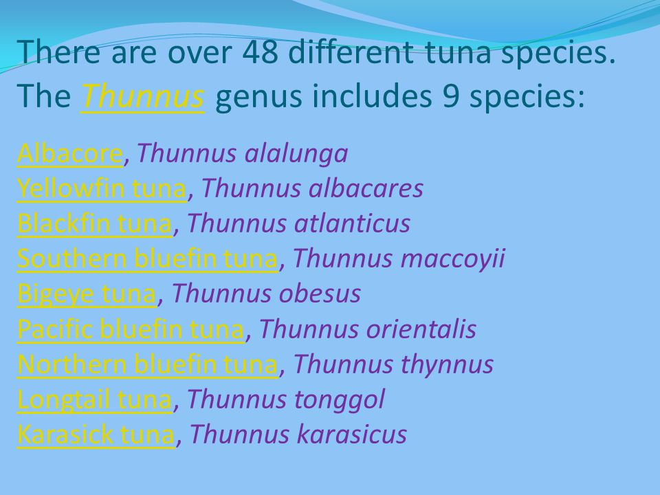 There are over 48 different tuna species
