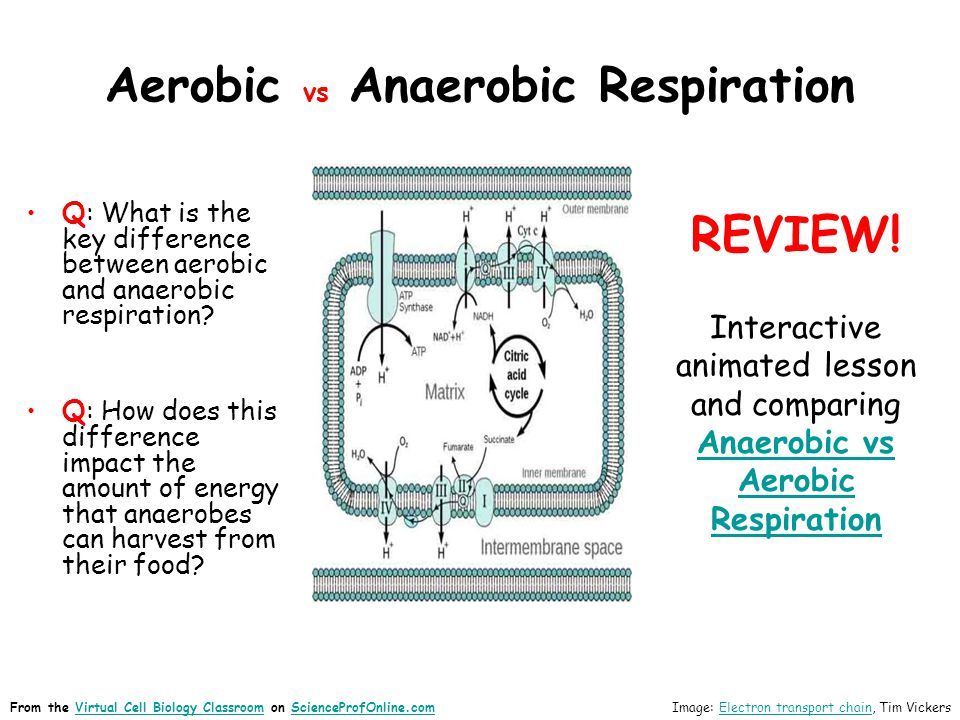 anaerobic respiration examples related keywords