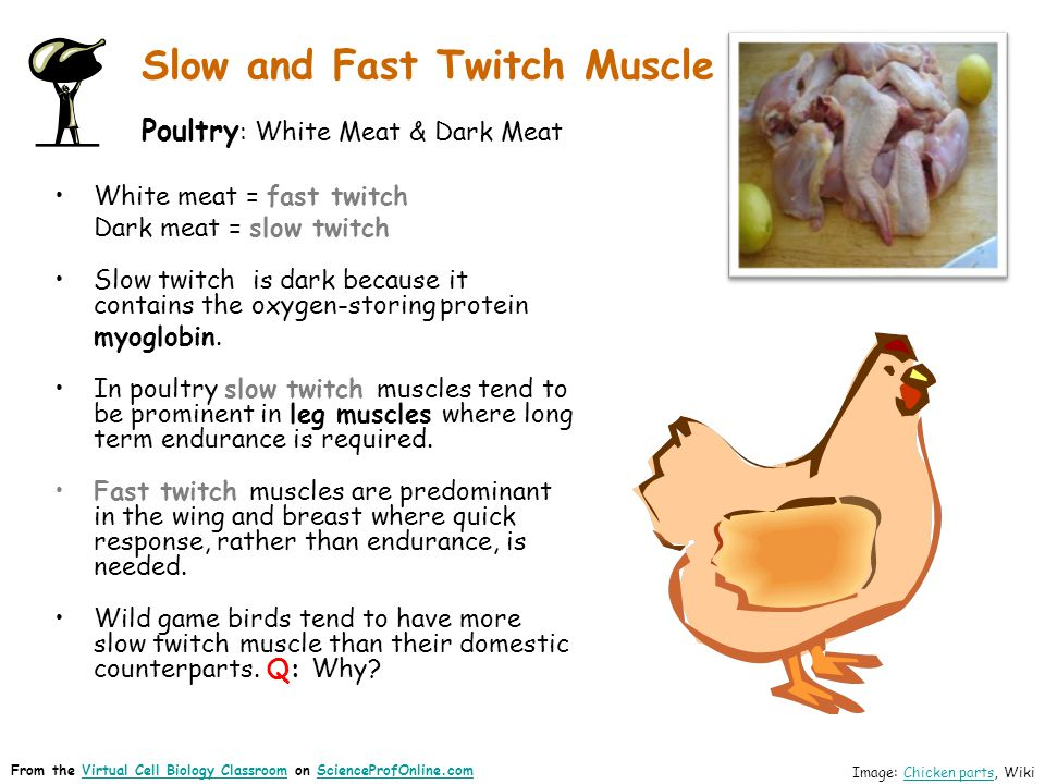 Slow and Fast Twitch Muscle Poultry: White Meat & Dark Meat