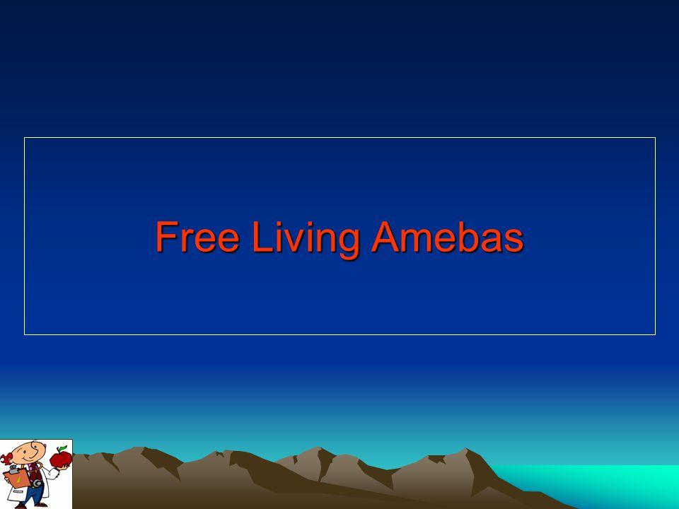 Free Living Amebas