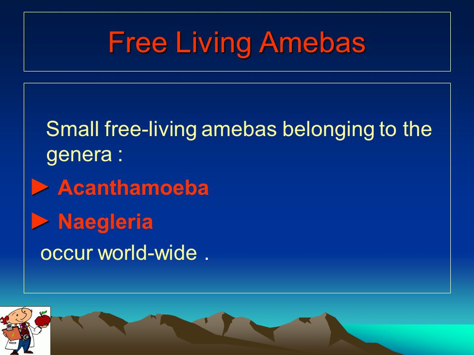 Free Living Amebas ► Acanthamoeba ► Naegleria