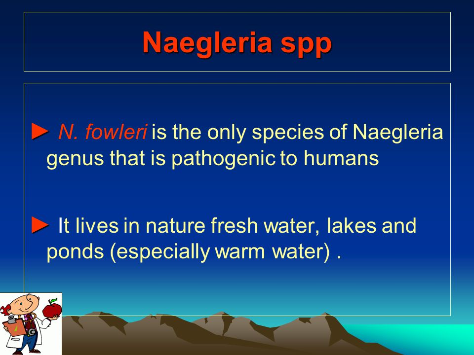 Naegleria spp ► N. fowleri is the only species of Naegleria genus that is pathogenic to humans.