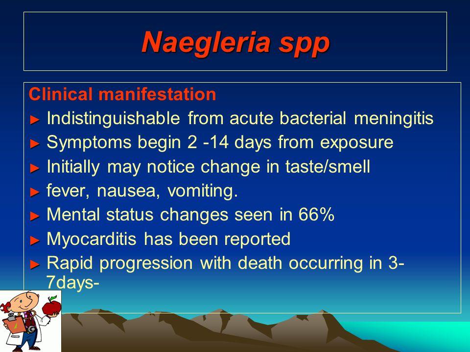 Naegleria spp Clinical manifestation