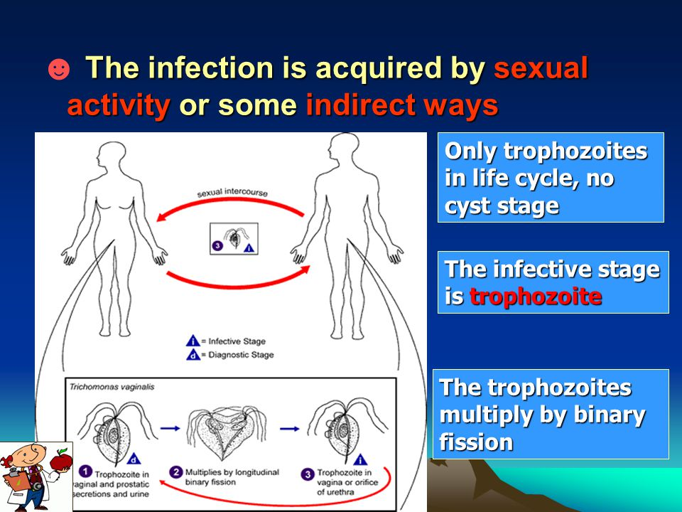☻ The infection is acquired by sexual activity or some indirect ways
