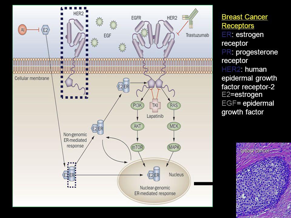 Breast Cancer Receptors