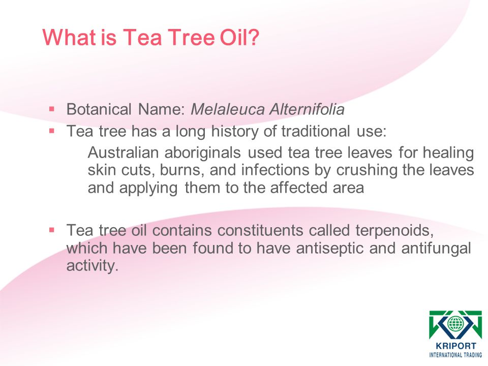 What is Tea Tree Oil Botanical Name: Melaleuca Alternifolia