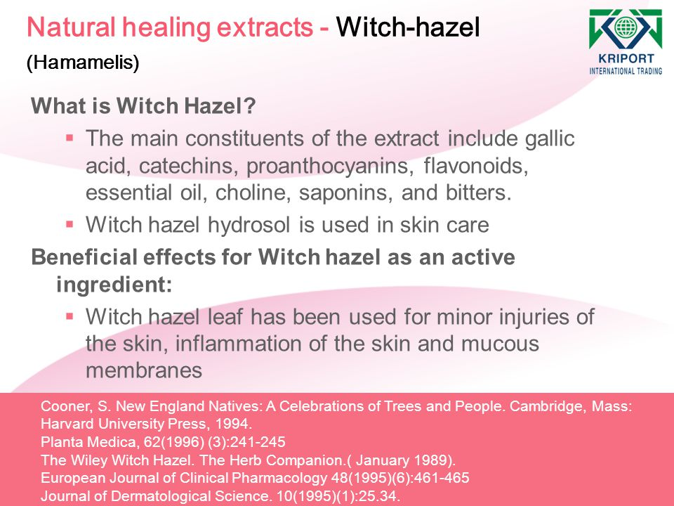 Natural healing extracts - Witch-hazel (Hamamelis)