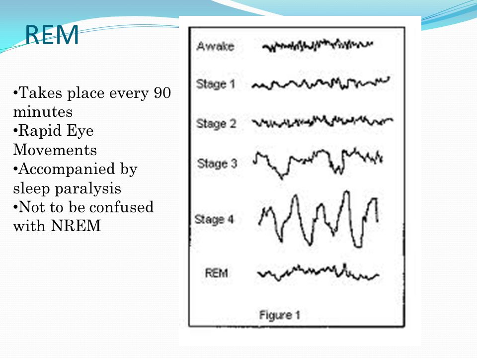 REM Takes place every 90 minutes Rapid Eye Movements