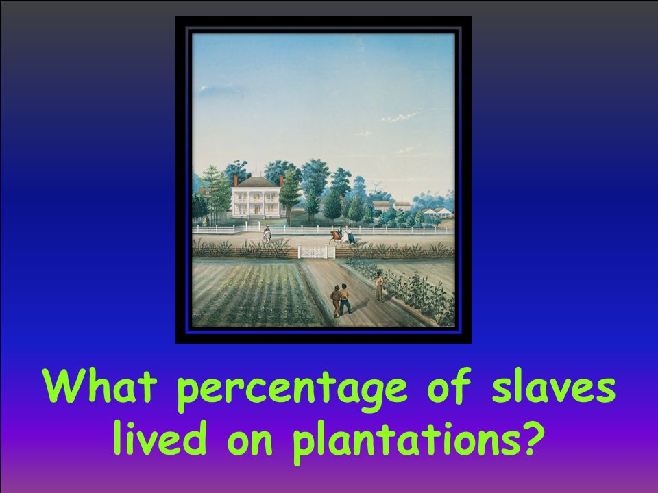 What percentage of slaves lived on plantations