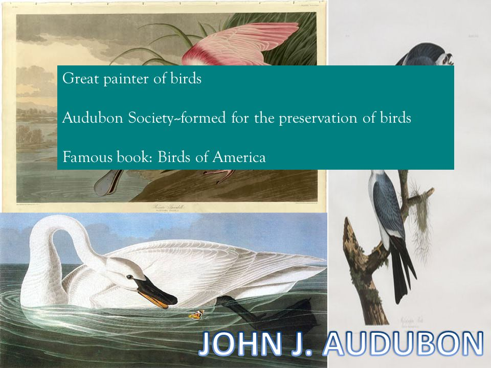 JOHN J. AUDUBON Great painter of birds