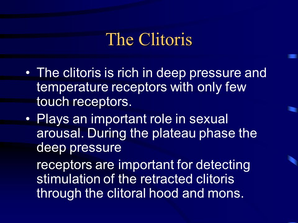 The Clitoris The clitoris is rich in deep pressure and temperature receptors with only few touch receptors.
