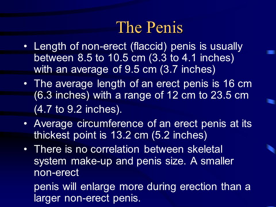 The Penis Length of non-erect (flaccid) penis is usually between 8.5 to 10.5 cm (3.3 to 4.1 inches) with an average of 9.5 cm (3.7 inches)