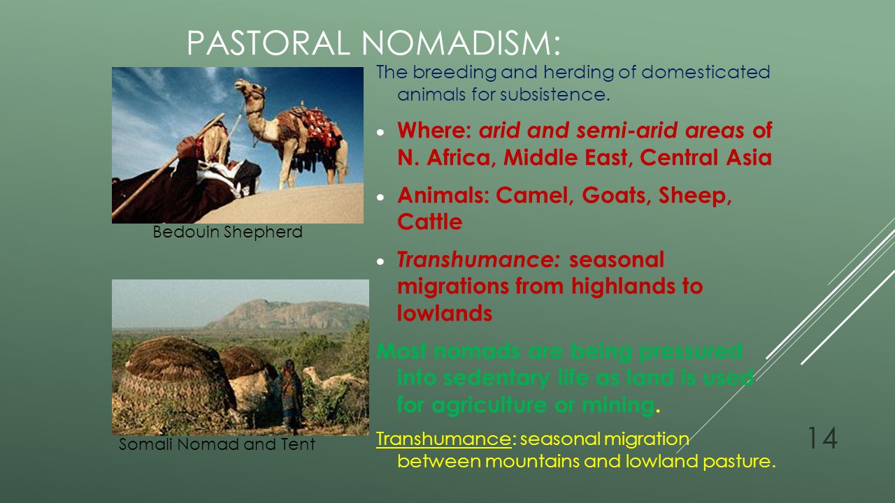 Pastoral Nomadism: The breeding and herding of domesticated animals for subsistence.