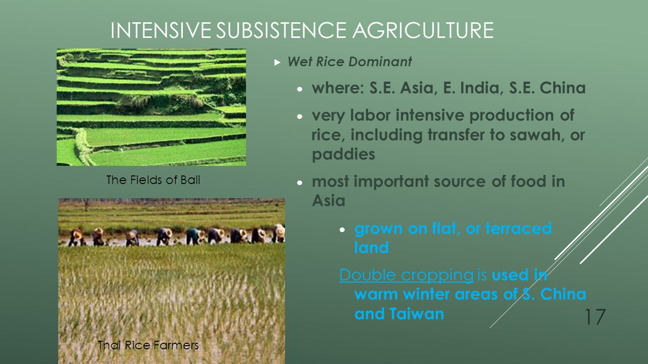 agribusiness or subsistence farming essay Commercial farming involves raising crops and livestock to sell for a profit the needs of the market help determine which crops are grown with subsistence farming.