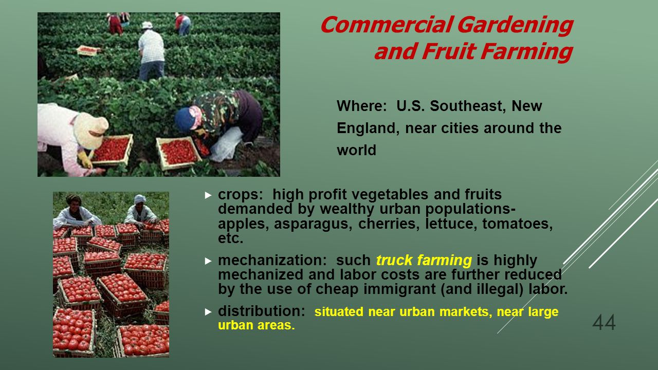 Commercial Gardening and Fruit Farming