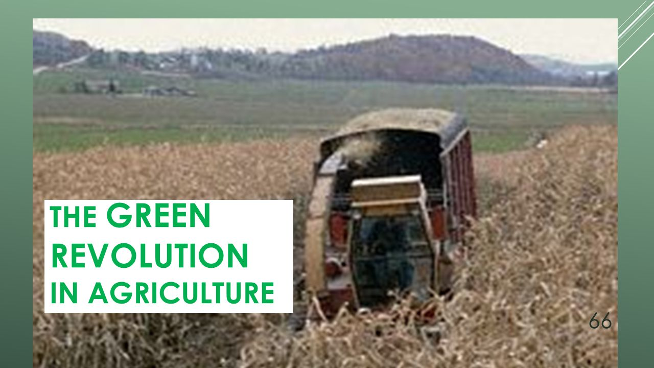 The Green Revolution in Agriculture