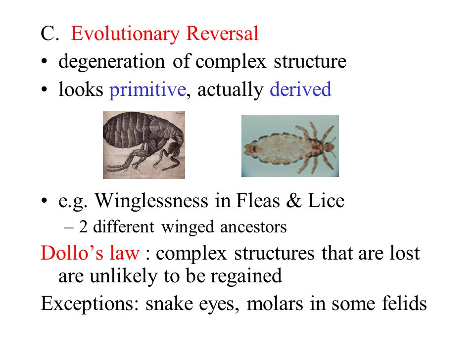 C. Evolutionary Reversal degeneration of complex structure