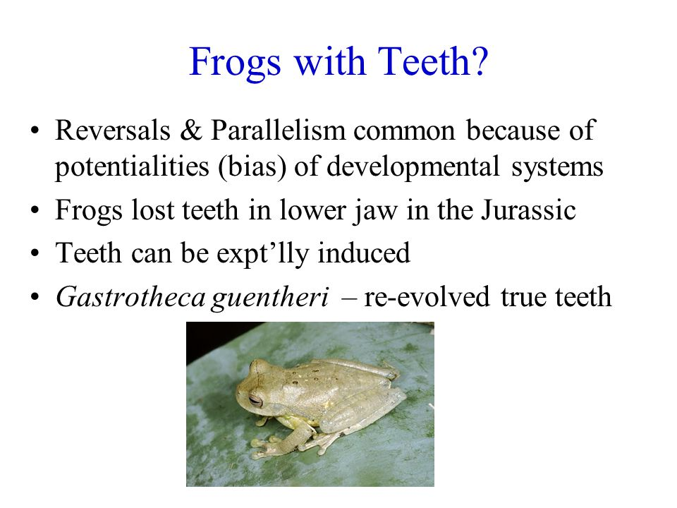 Frogs with Teeth Reversals & Parallelism common because of potentialities (bias) of developmental systems.