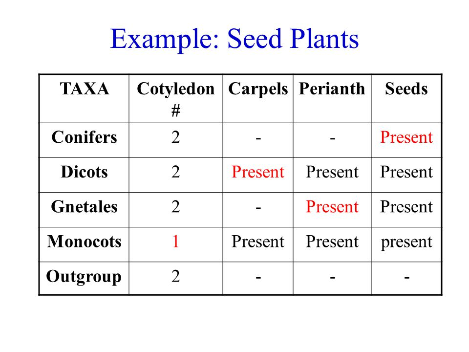 Example: Seed Plants TAXA Cotyledon # Carpels Perianth Seeds Conifers
