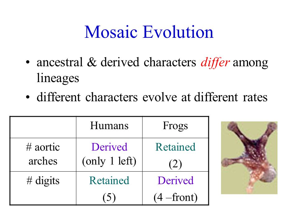 Mosaic Evolution ancestral & derived characters differ among lineages