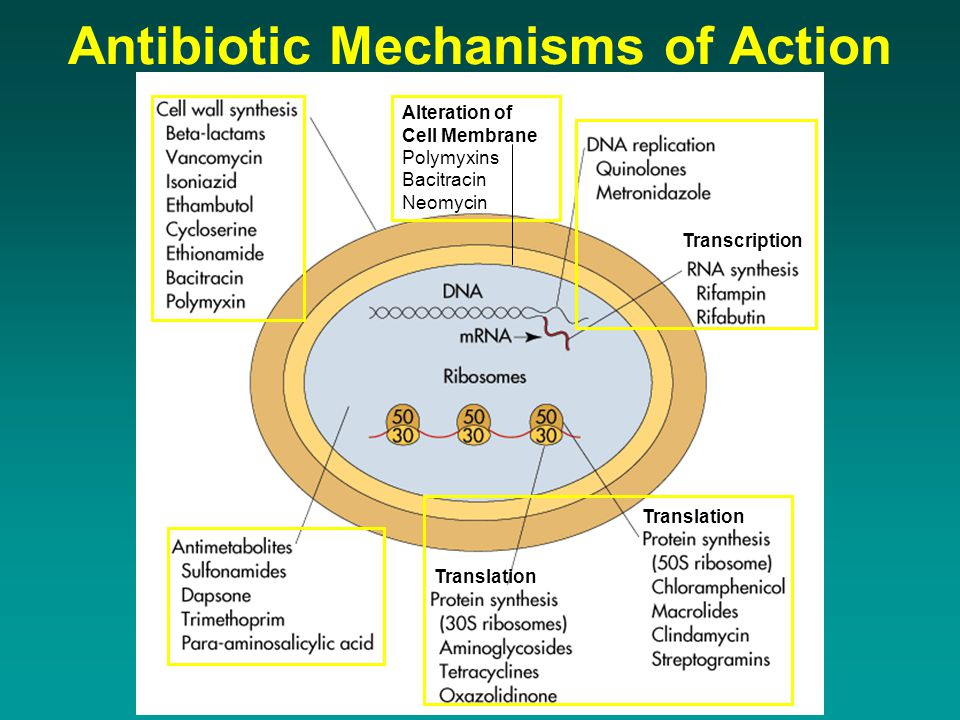 Antibiotic Mechanisms of Action