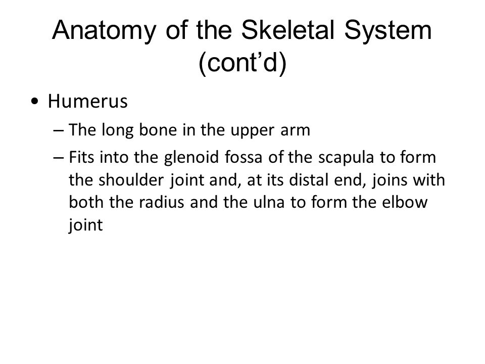 Anatomy of the Skeletal System (cont'd)