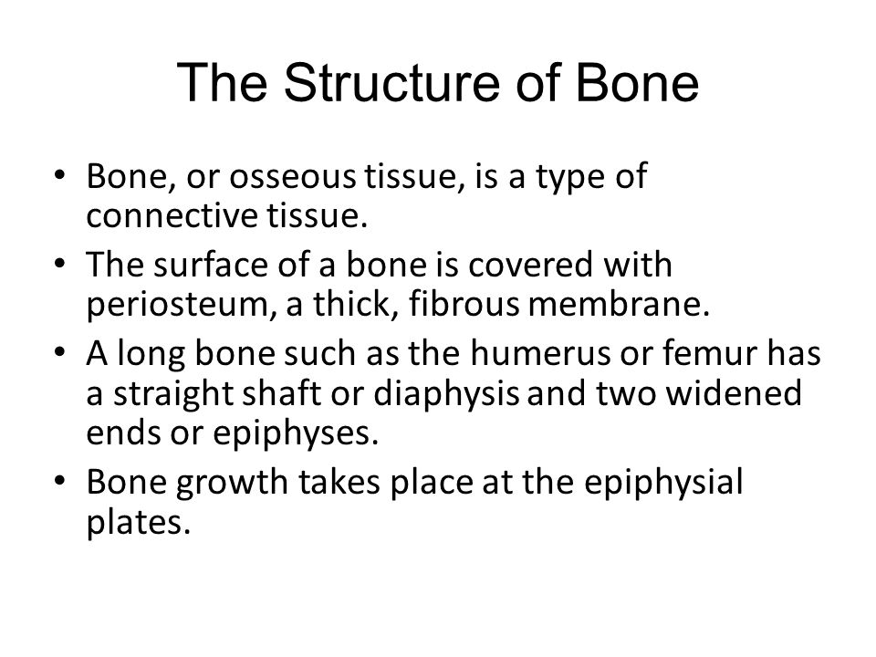 The Structure of Bone Bone, or osseous tissue, is a type of connective tissue.
